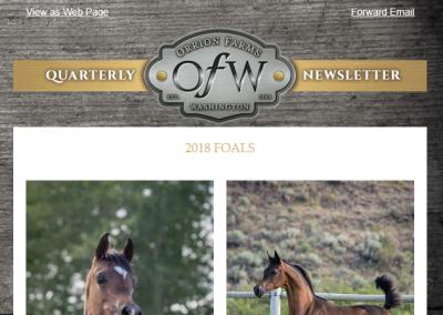 Newsletter design for horse club